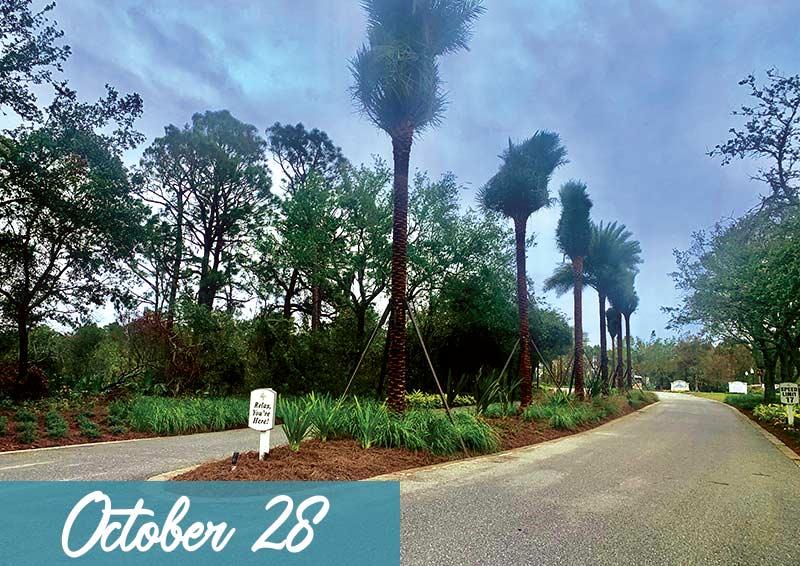 Landscape Oct 28